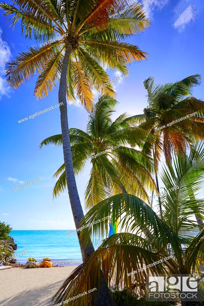 Stock Photo: Key west florida Smathers beach palm trees in USA.
