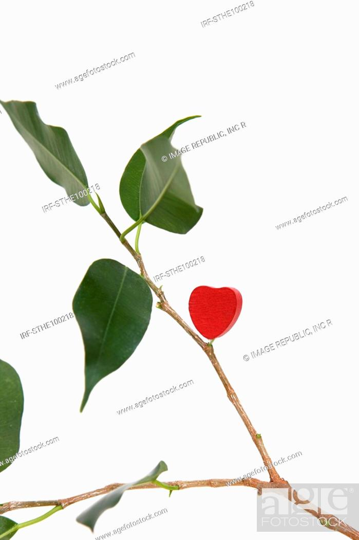 Stock Photo: heart shape on the bough.