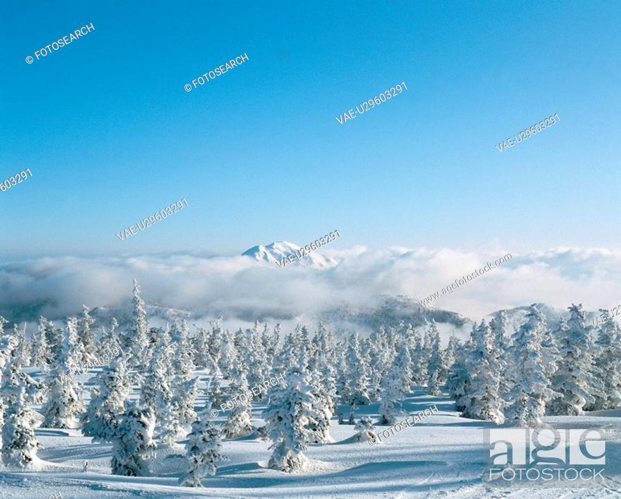 Stock Photo: forest, scenery, snow, tree, landscape, winter, nature.