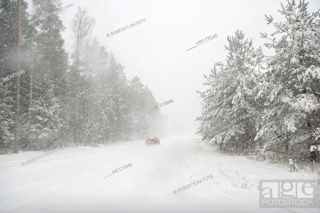 Imagen: Beautiful landscape of the forest on a cold winter day with trees covered with snow. Snowfall in the forest in Latvia. Country road covered with snow.