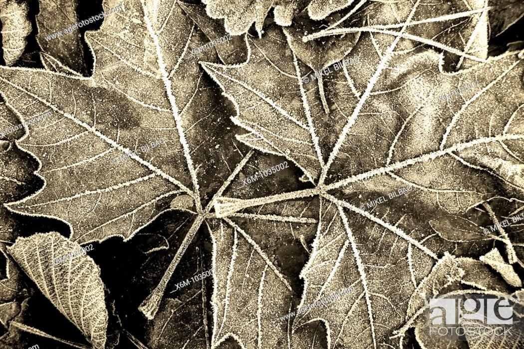 Stock Photo: dead leaves in autumn in black and white.