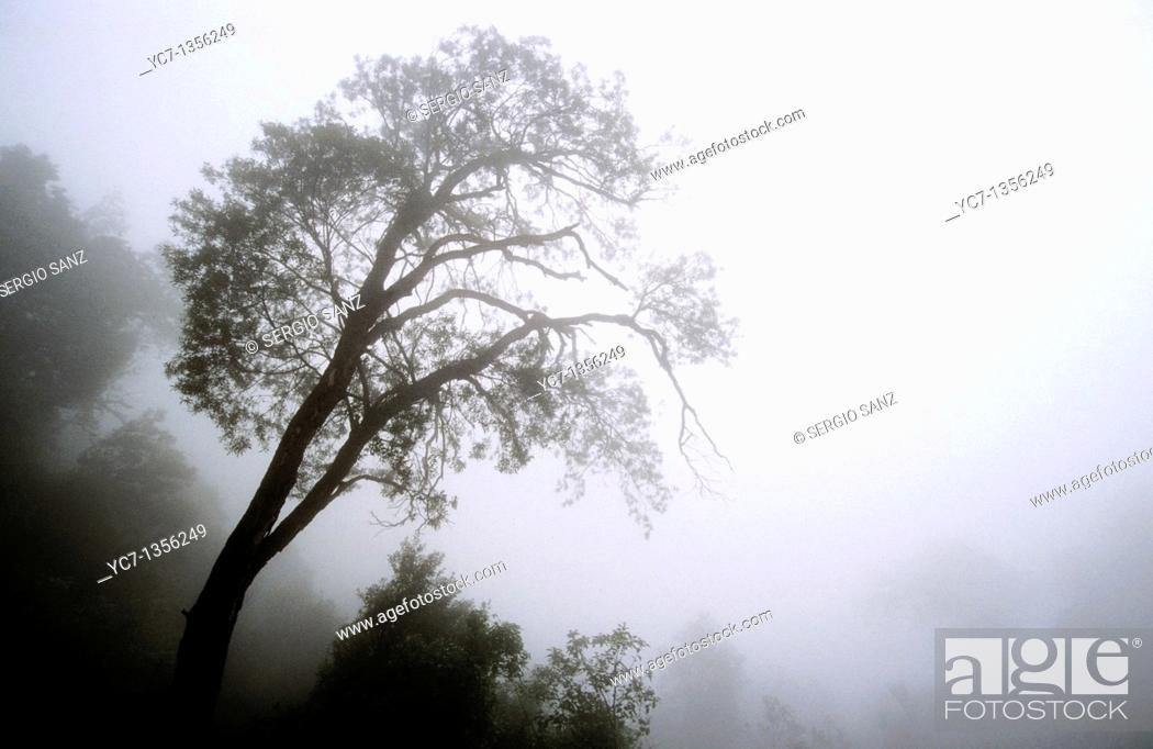 Stock Photo: tree in the fog.