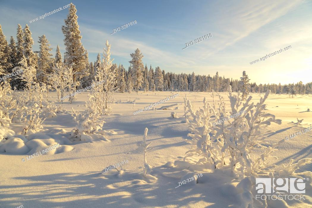 Stock Photo: Landscape in winter season, nice warm afternoon light with clear blue sky, Gällivare county, Swedish Lapland, Sweden.