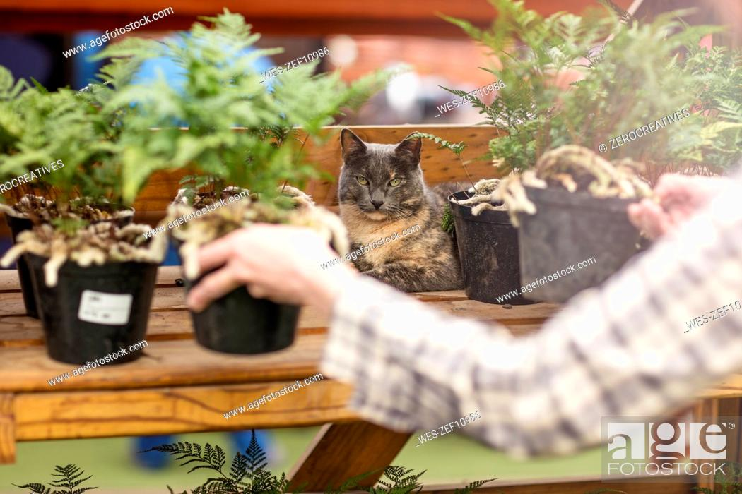 Stock Photo: Woman putting pots on stand in garden centre.