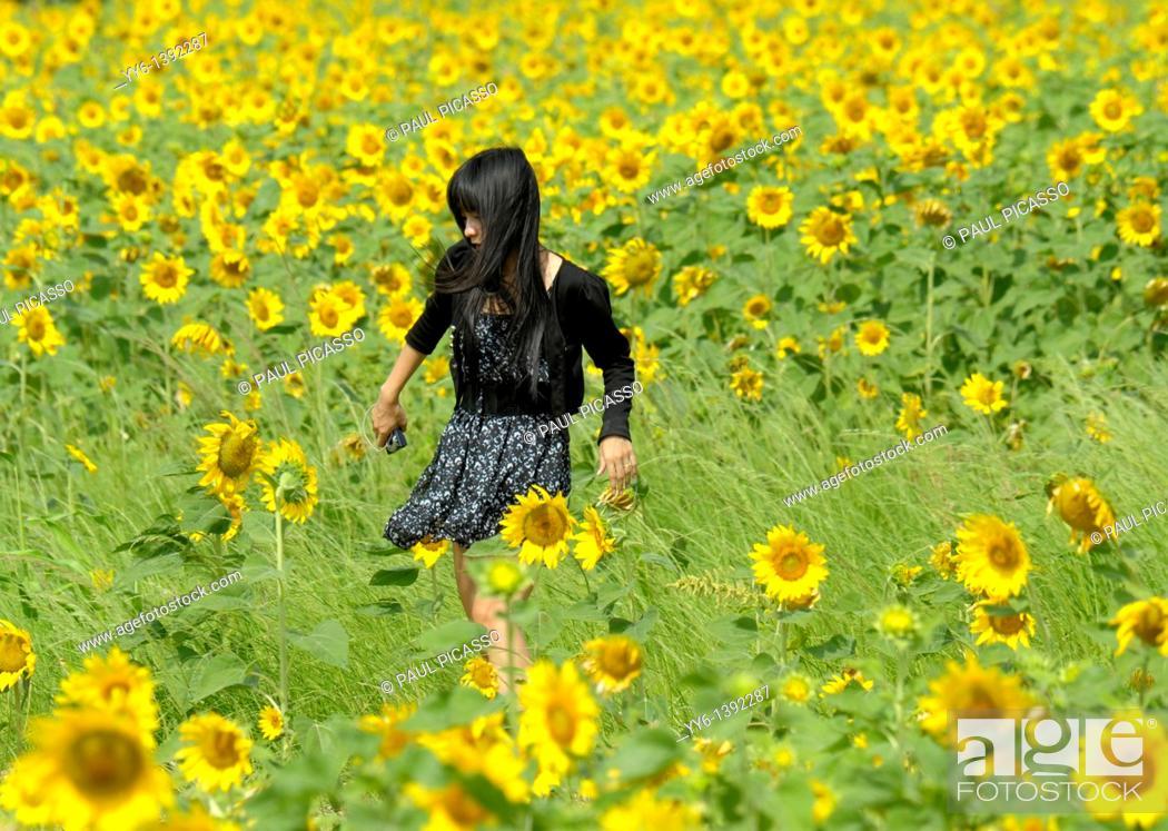 Stock Photo: girl walking through sunflower field , sunflower fields of lopburi, and saraburi, central Thailand.