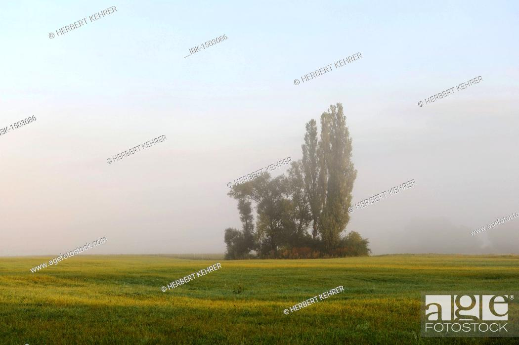 Stock Photo: Trees and shrubs on a meadow, poplar, Schwarzach am Main, Lower Franconia, Bavaria, Germany, Europe.