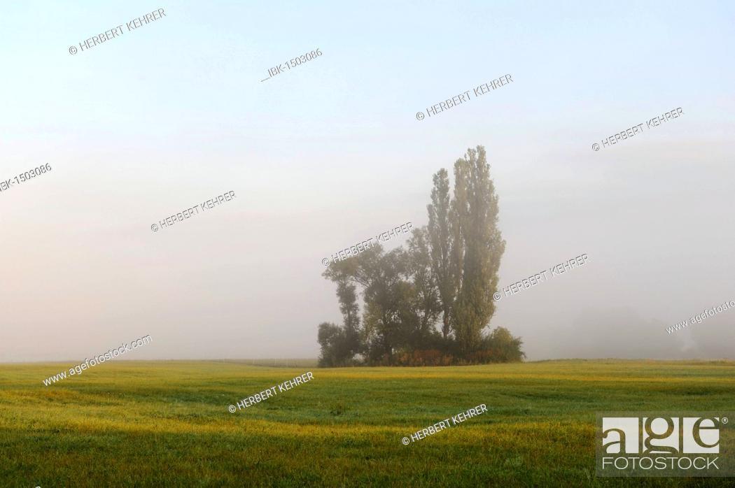 Stock Photo: Trees and shrubs on a meadow, poplar, Schwarzach am Main, Lower Franconia, Bavaria, Germany, Europe.