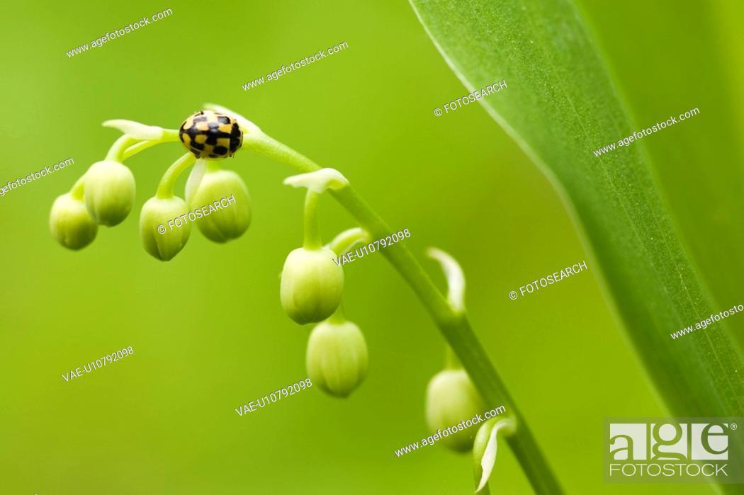 Stock Photo: blooms, beetle, blooming, bloomer, bloom, alfred.