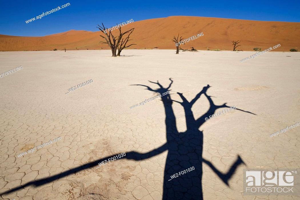 Stock Photo: Africa, Namibia, Deadvlei, Dead trees.