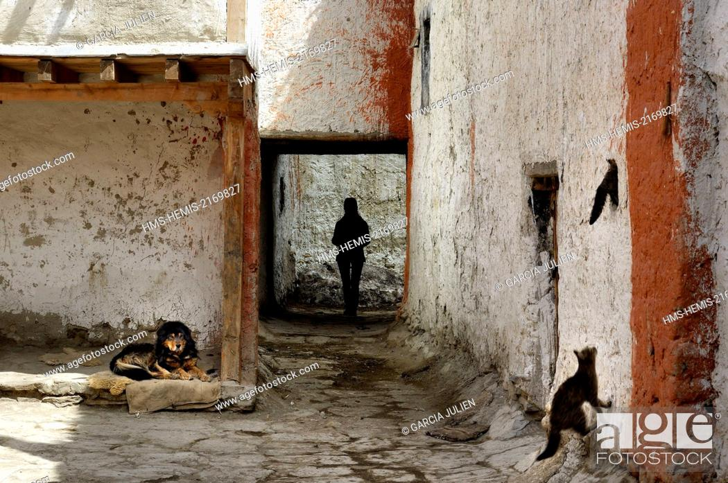 Stock Photo: Nepal, Gandaki zone, Upper Mustang (near the border with Tibet), dog, cats and silhouette of a woman in a street of the walled city of Lo Manthang.