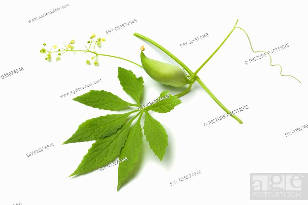 Photo de stock: Single green heirloom wild cucumber, flowers and leaf on white background.