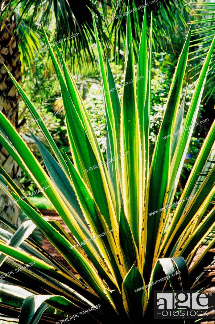 Stock Photo: Majorelle Garden, Marrakech, Morocco, Africa.