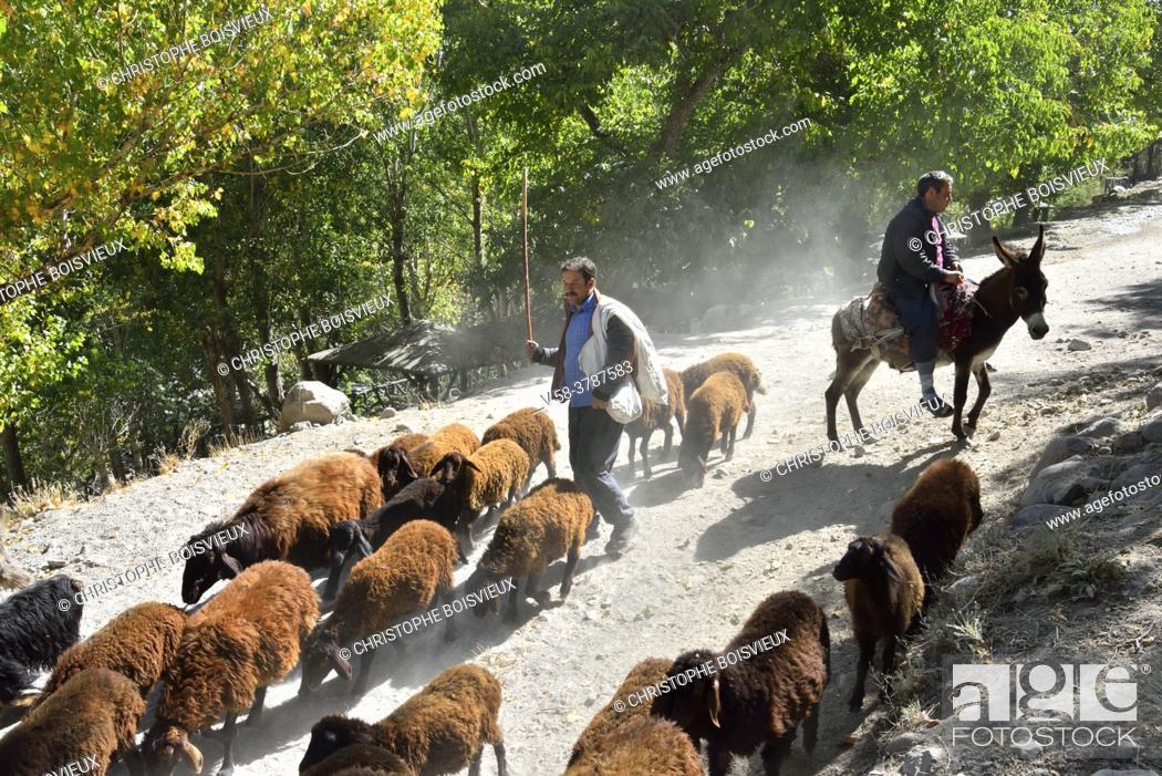 Stock Photo: Iran, East Azerbaijan province, Kandovan village, Shephersd leading his flock.