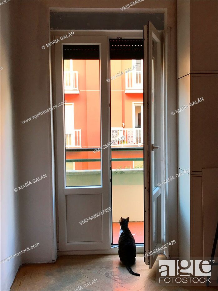 Stock Photo: Cat sitting at an open door, looking at the street.