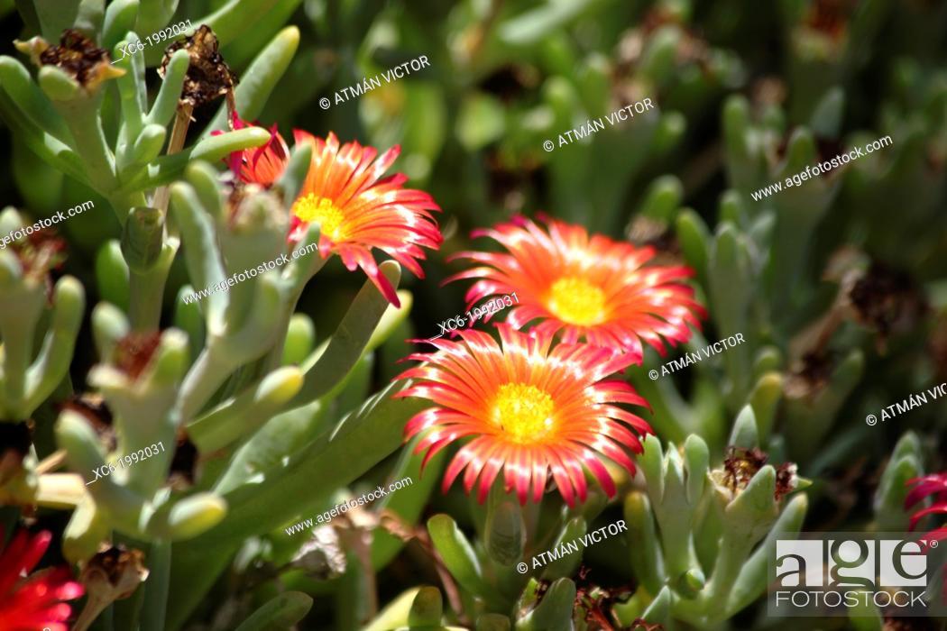 Stock Photo: ornamental plant.