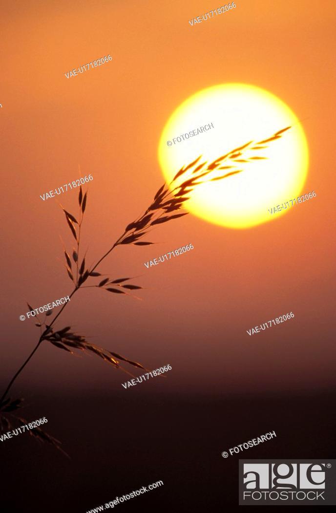 Stock Photo: CLOSE, close-up, grass, Jan, nature, ouside.