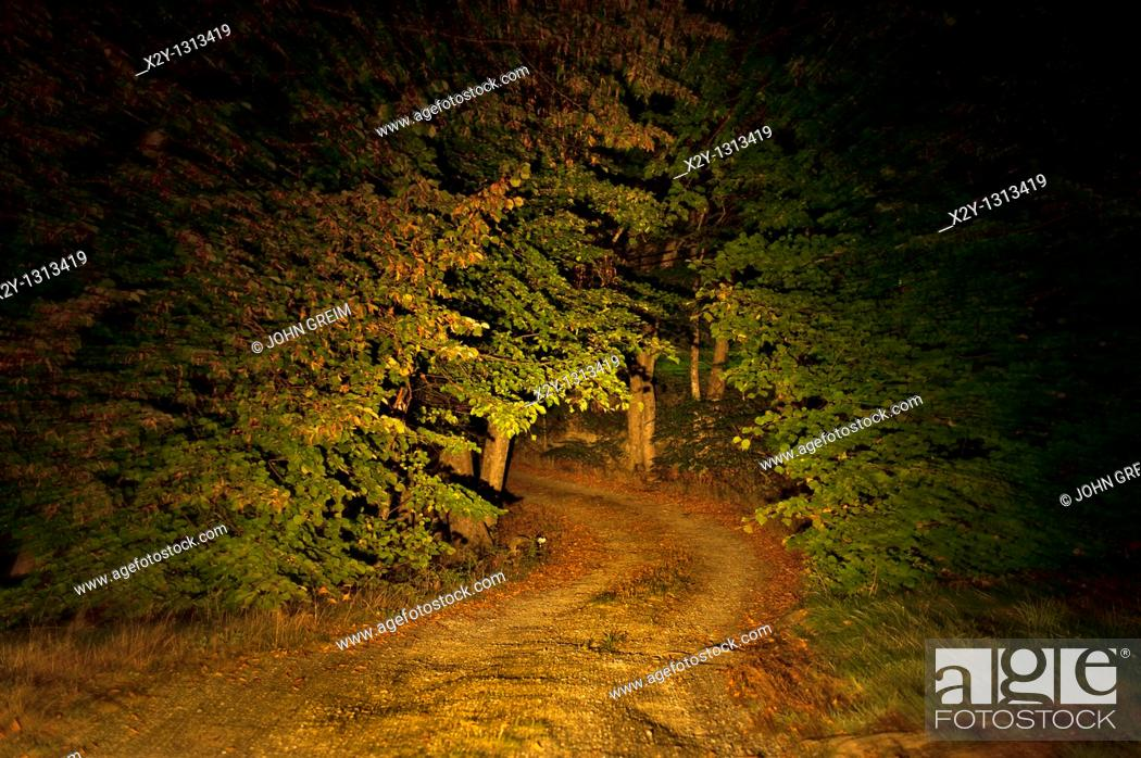 Stock Photo: Remote unpaved country road through forest trees at night.