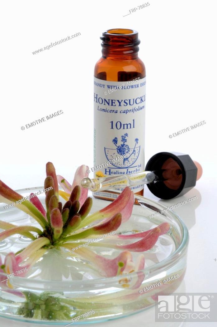 Stock Photo: Homeopathic remedies: Honeysuckle.
