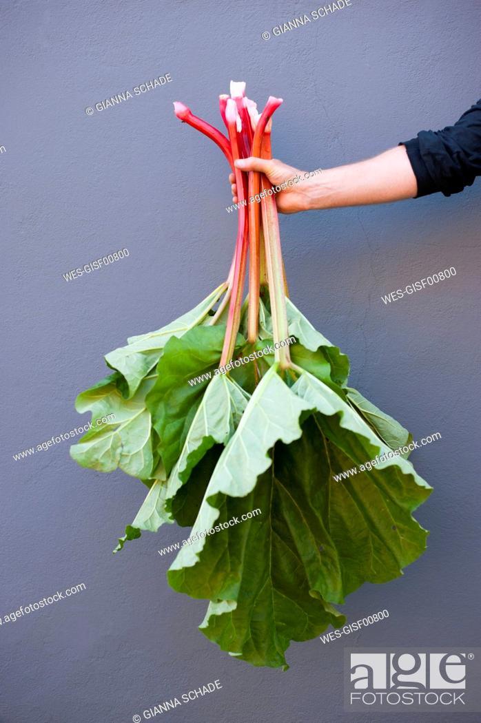 Stock Photo: Arm of man holding fresh rhubarb.