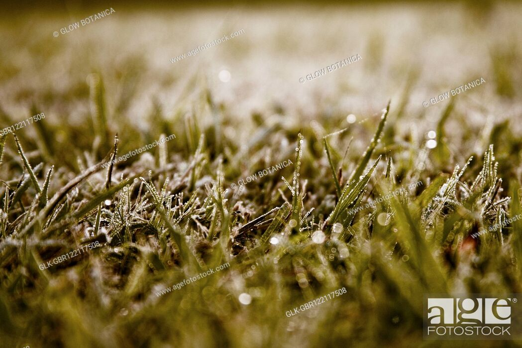 Stock Photo: Dew on grass in a field.