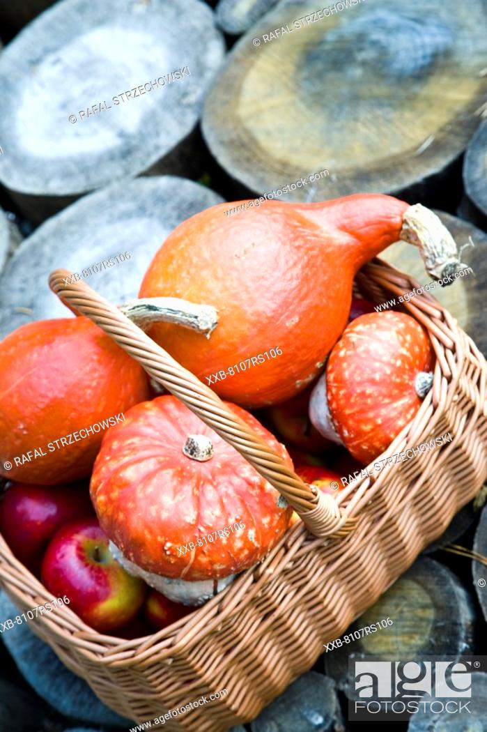 Stock Photo: Autumn basket with vegetables and fruits.