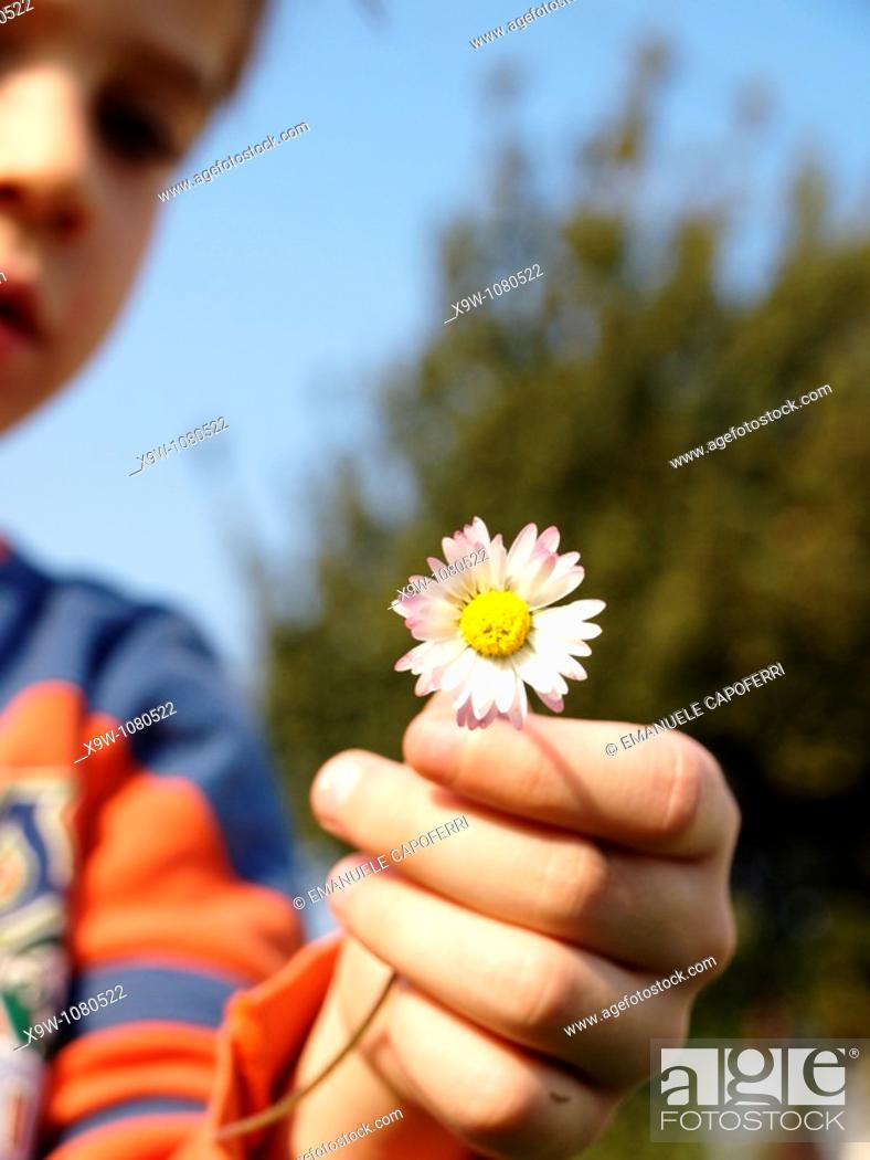 Stock Photo: child and flower, daisy.