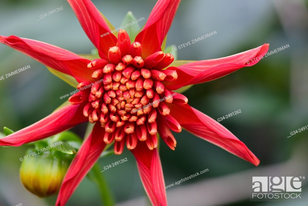 Stock Photo: Single Red Star.