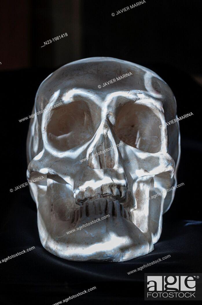 Stock Photo: Skull.