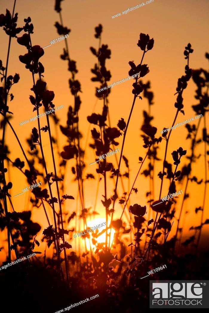 Stock Photo: Sunset on Apache Trail, Arizona.