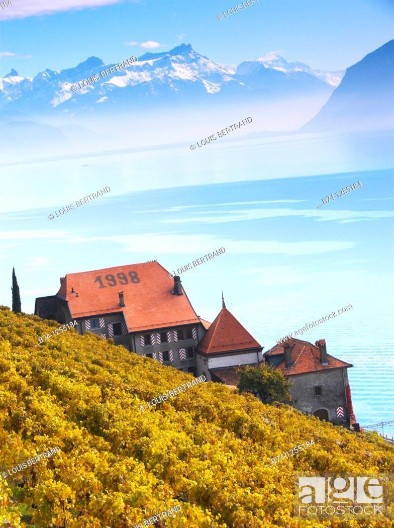 Stock Photo: terrasse de lavaux,rivaz,vaud,suisse.