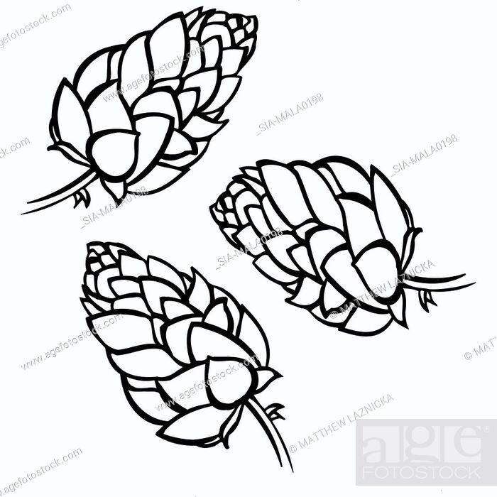 Imagen: Three flower heads on white.
