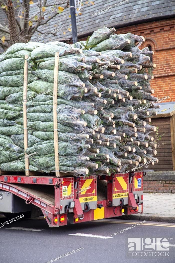 Stock Photo: Delivering Trees for Christmas, London UK.