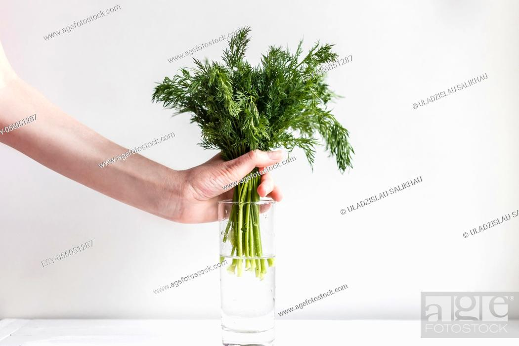 Stock Photo: Female hands put fresh fennel into a glass with water.