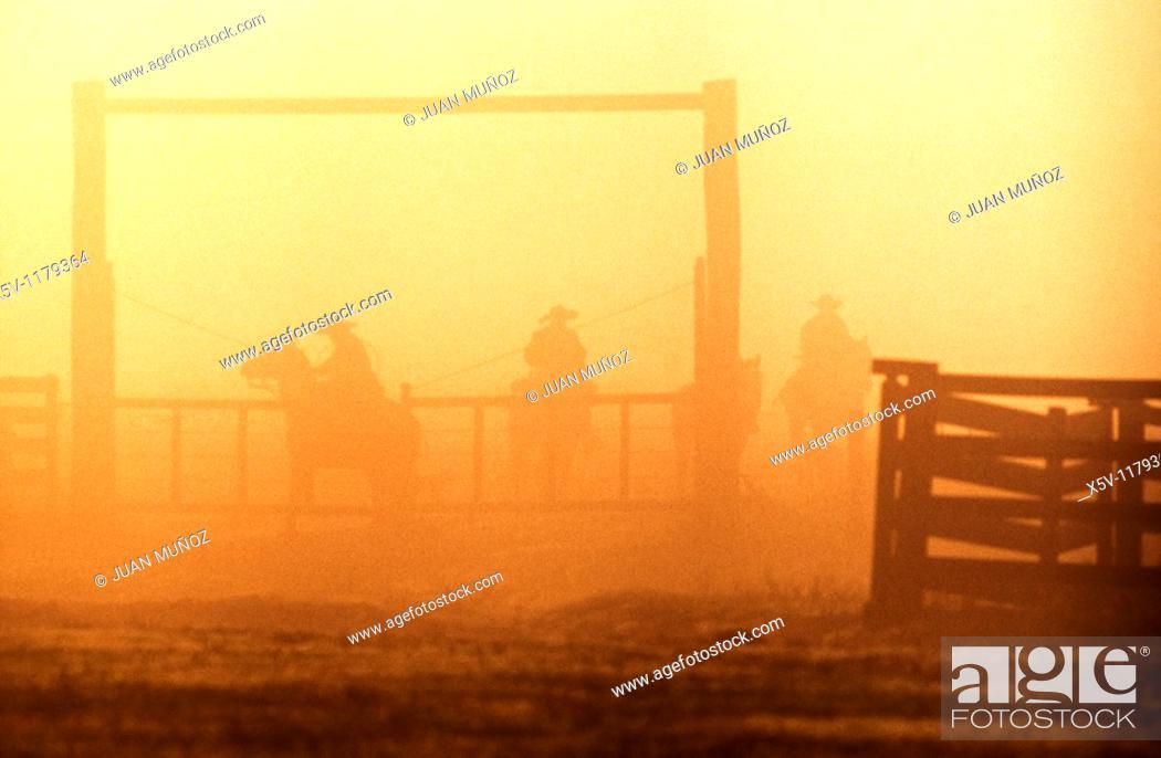 Stock Photo: Gauchos at dawn, Estancia Yacare, Paraguay.