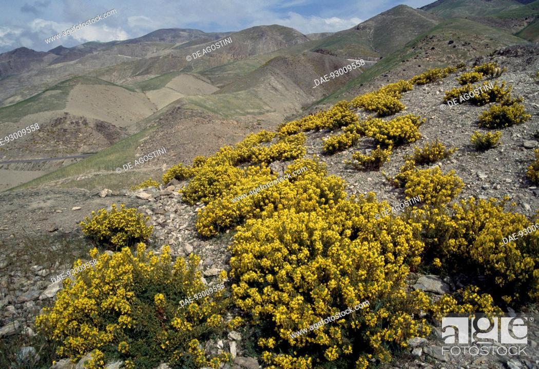 Imagen: Rif mountains, Morocco.