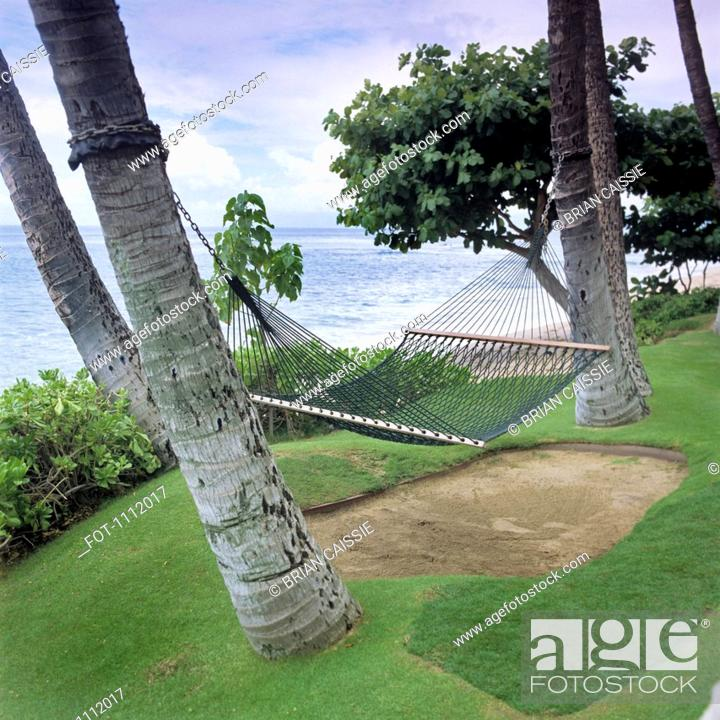 Stock Photo: A hammock hanging from two palm trees, Maui, Hawaii.