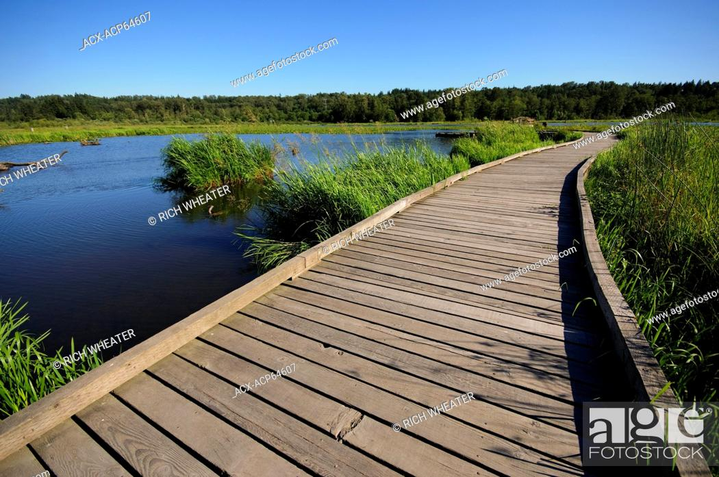 Stock Photo: Boardwalk at Burnaby Lake Regional Park, Burnaby, British Columbia, Canada.