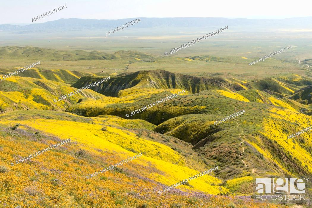 Imagen: Scenic landscape with yellow wildflowers growing on hills,  Carrizo Plain National Monument, California, USA.