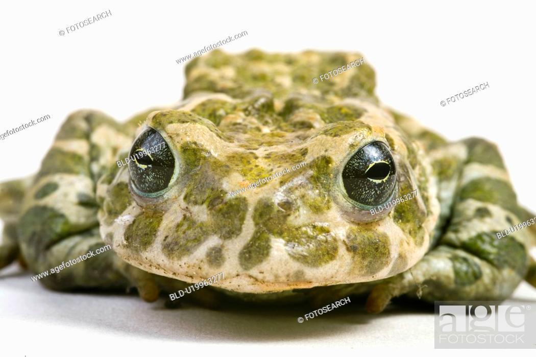 Stock Photo: animals, eyes, eye, close, alfred.