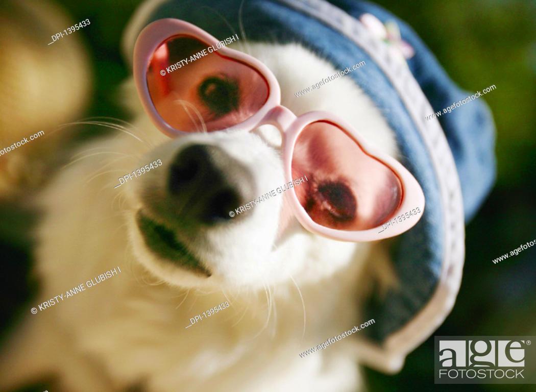 Stock Photo: Pet.