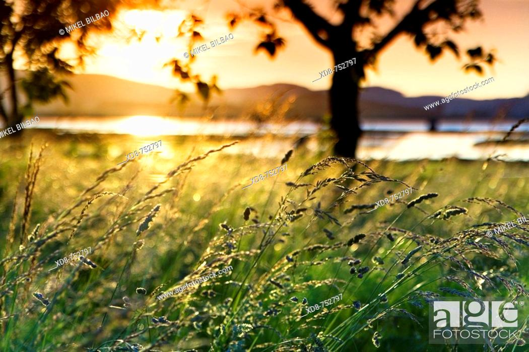 Stock Photo: Grassland with trees close to the river at sunset, Ason river, Colindres, Cantabria, Spain.