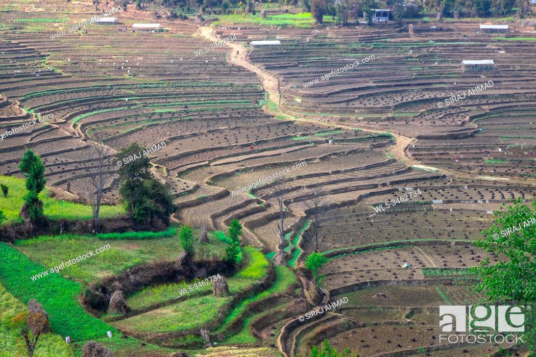 Stock Photo: Terrace rice farm barren after harvest season in Nepal.