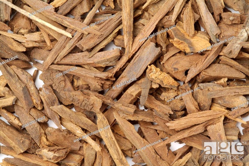 Stock Photo: Common Aucklandia Root.