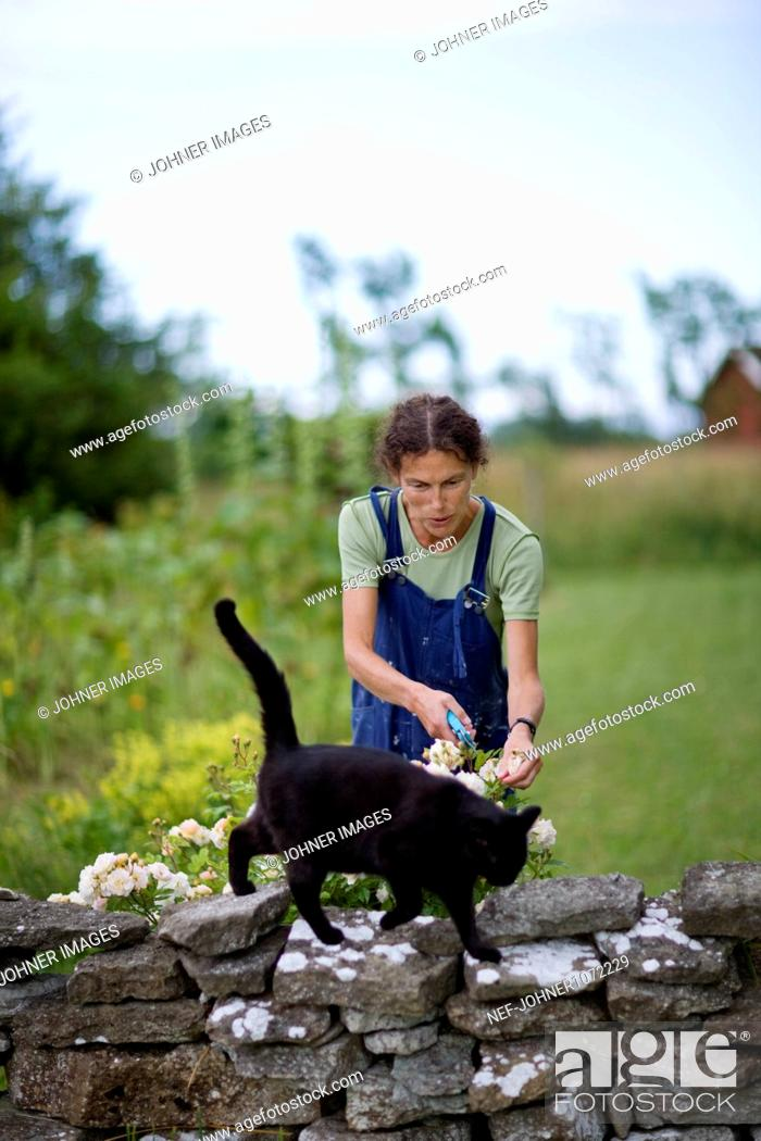Stock Photo: Woman pruning flowers in garden with cat.