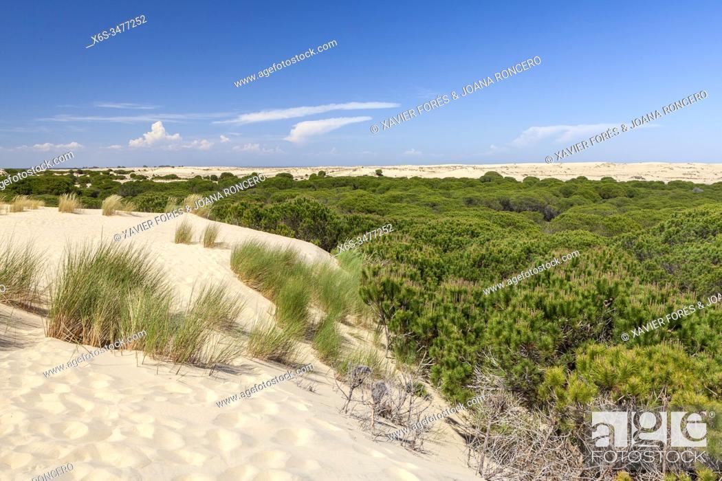 Imagen: National Park of Doñana, Huelva, Spain.