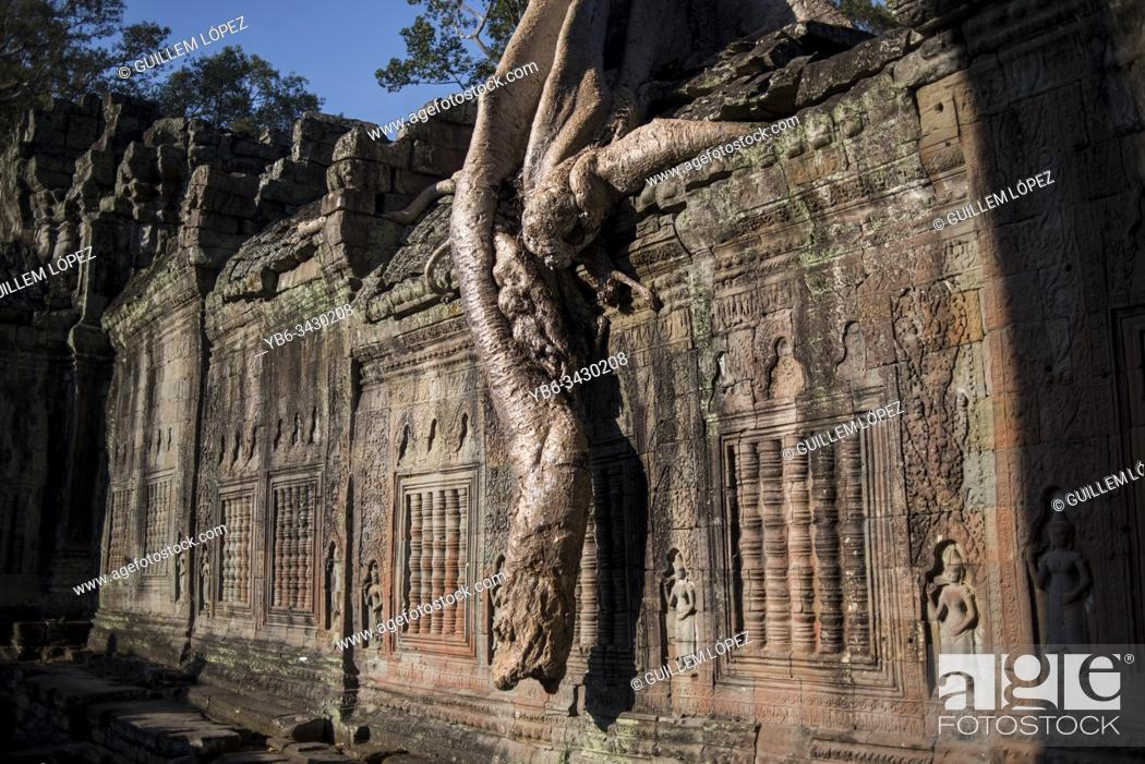 Stock Photo: Bayan tree roots growing on the Preah Khan temple walls, Angkor Wat, Siem Reap, Cambodia.