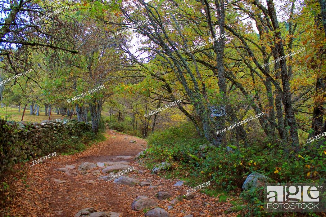 Stock Photo: Part of the trekking route leading from El Paular to El Purgatorio falls, near Rascafría (Madrid autonomous region), just after crossing twice the Aguilón river.