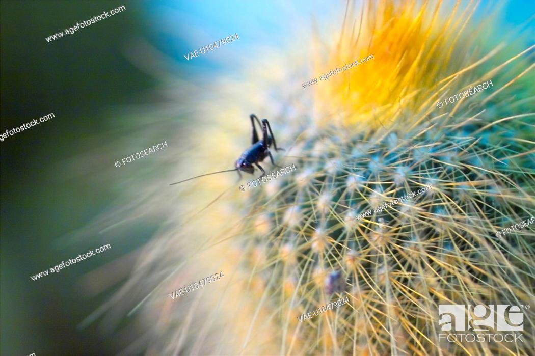 Stock Photo: insert, opuntia, plants, cactus, plant.