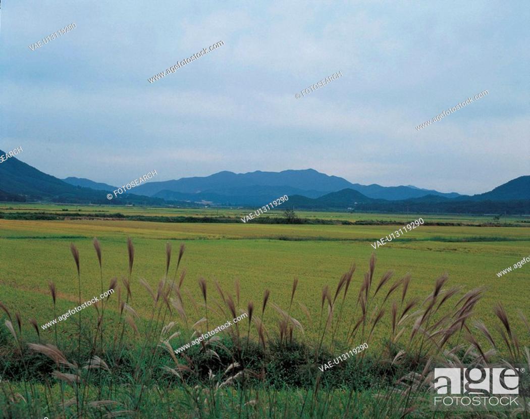Stock Photo: field, sky, landscape, scenery, reed, mountain.
