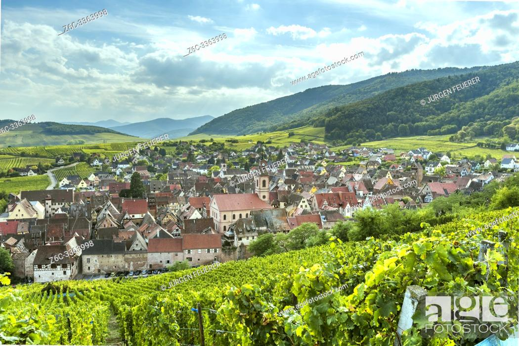 Imagen: landscape panorama of wine village Riquewihr at the foothills of the Vosges, Alsace, Wine Route, touristy destination between vineyards, France.